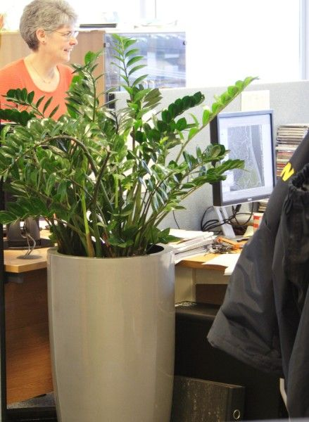 office greenery. Office Plants, Great Pot \u0026 Tropical Plants For Your Offices \u2014 Nature At Work Greenery