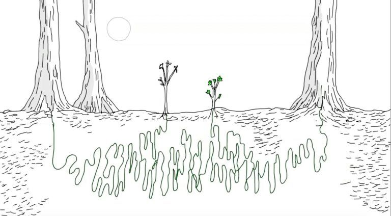 Trees Talk to Each Other in a Language We Can Learn