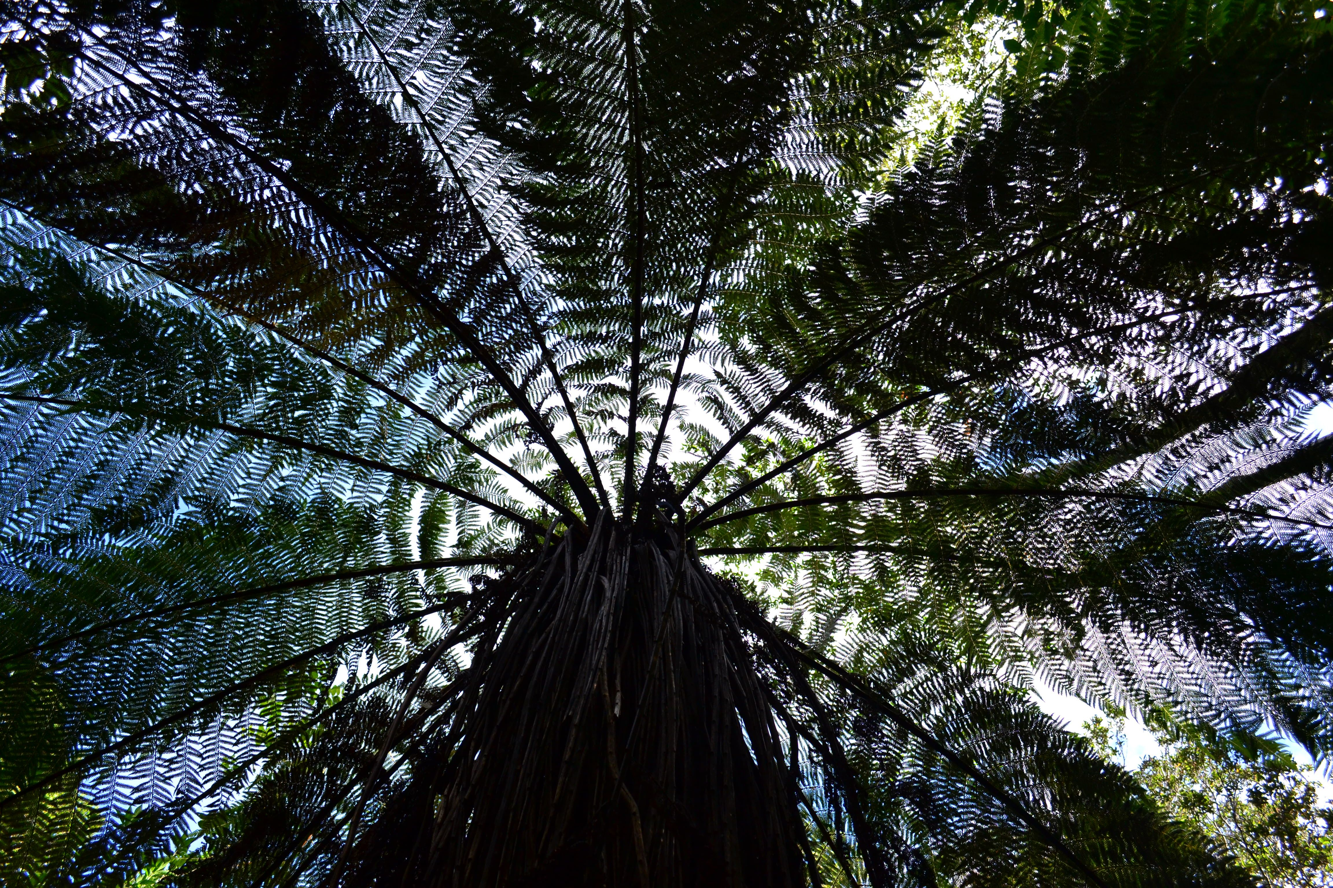 I love looking up through the canopy in the bush at the