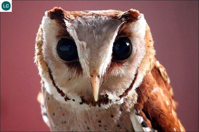 ☎️ https://www.facebook.com/WonderBirdSpecies/ 🦔🦔 Oriental ...