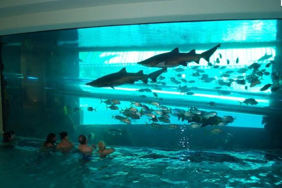 las vegas top 10 best swimming pools and pool clubs