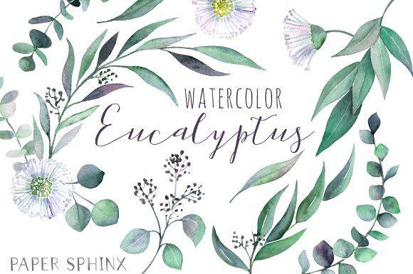 Watercolor Eucalyptus Leaf Pack Flower Clipart Watercolor Clip Art
