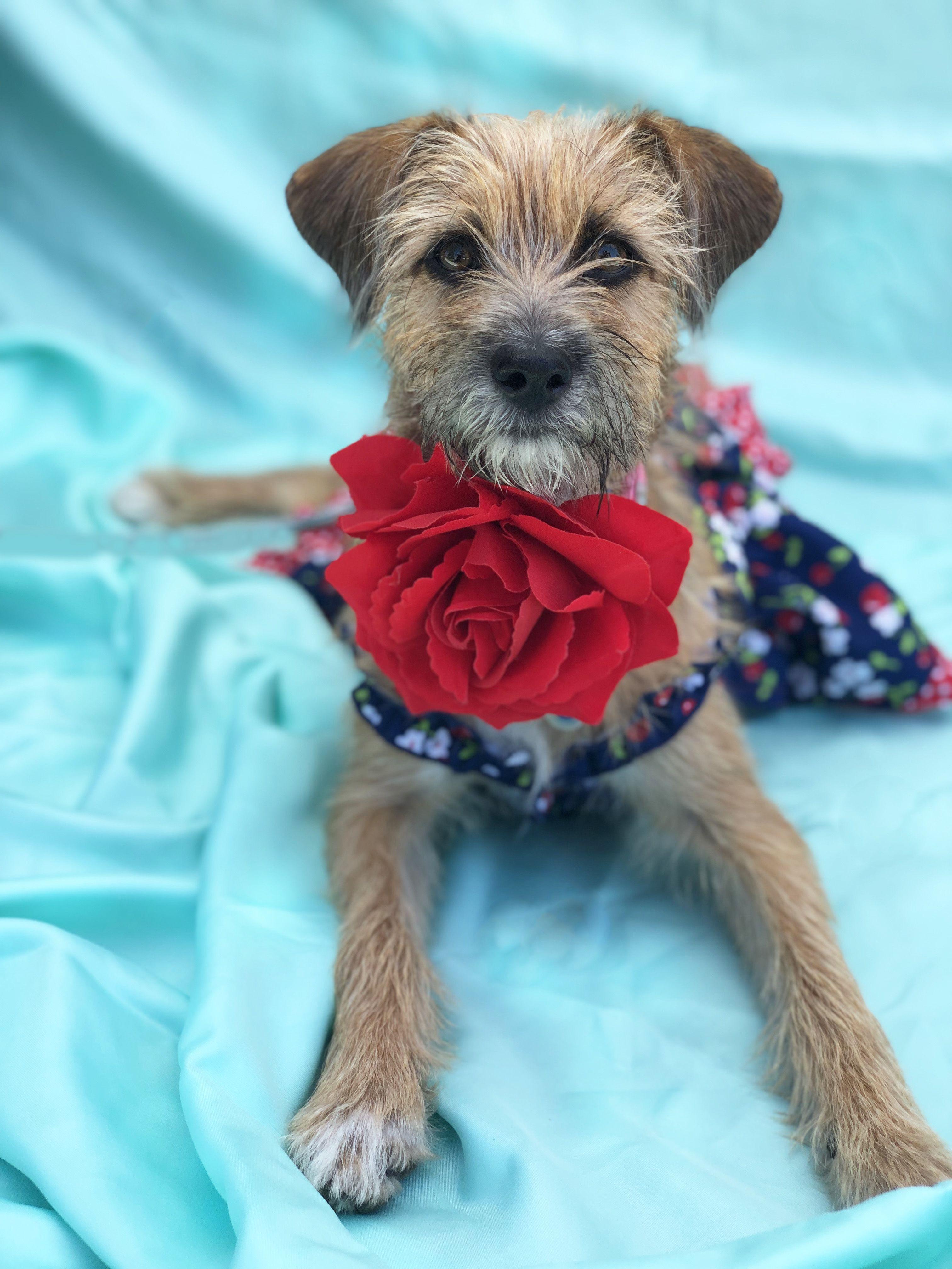 Adopt Beautiful BrooklynADOPT Me! on Dog shop, Help