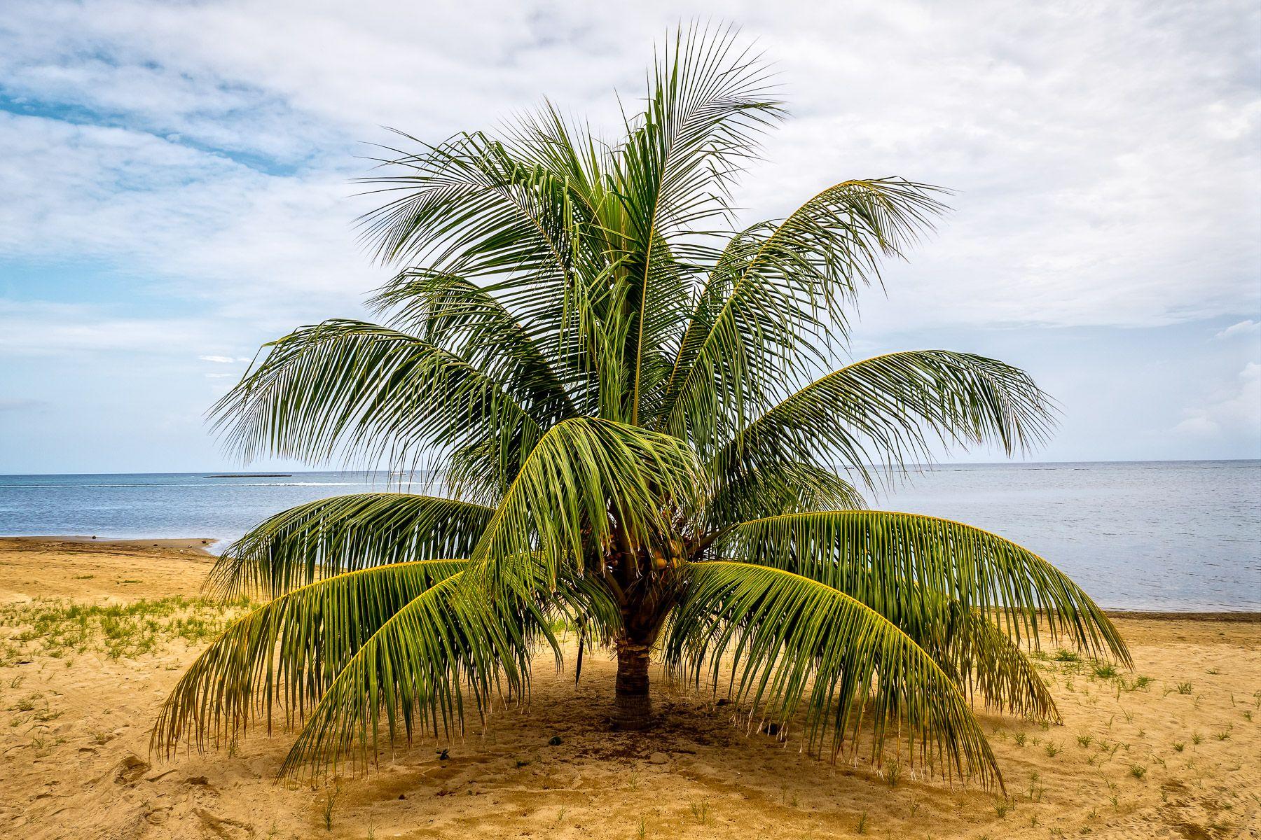 Shorty Honduras Travel Short Palm Trees Roatan Honduras
