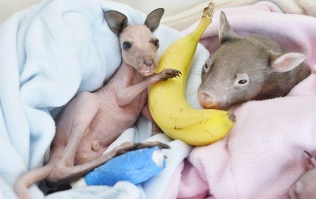 Liebe! Bananen!