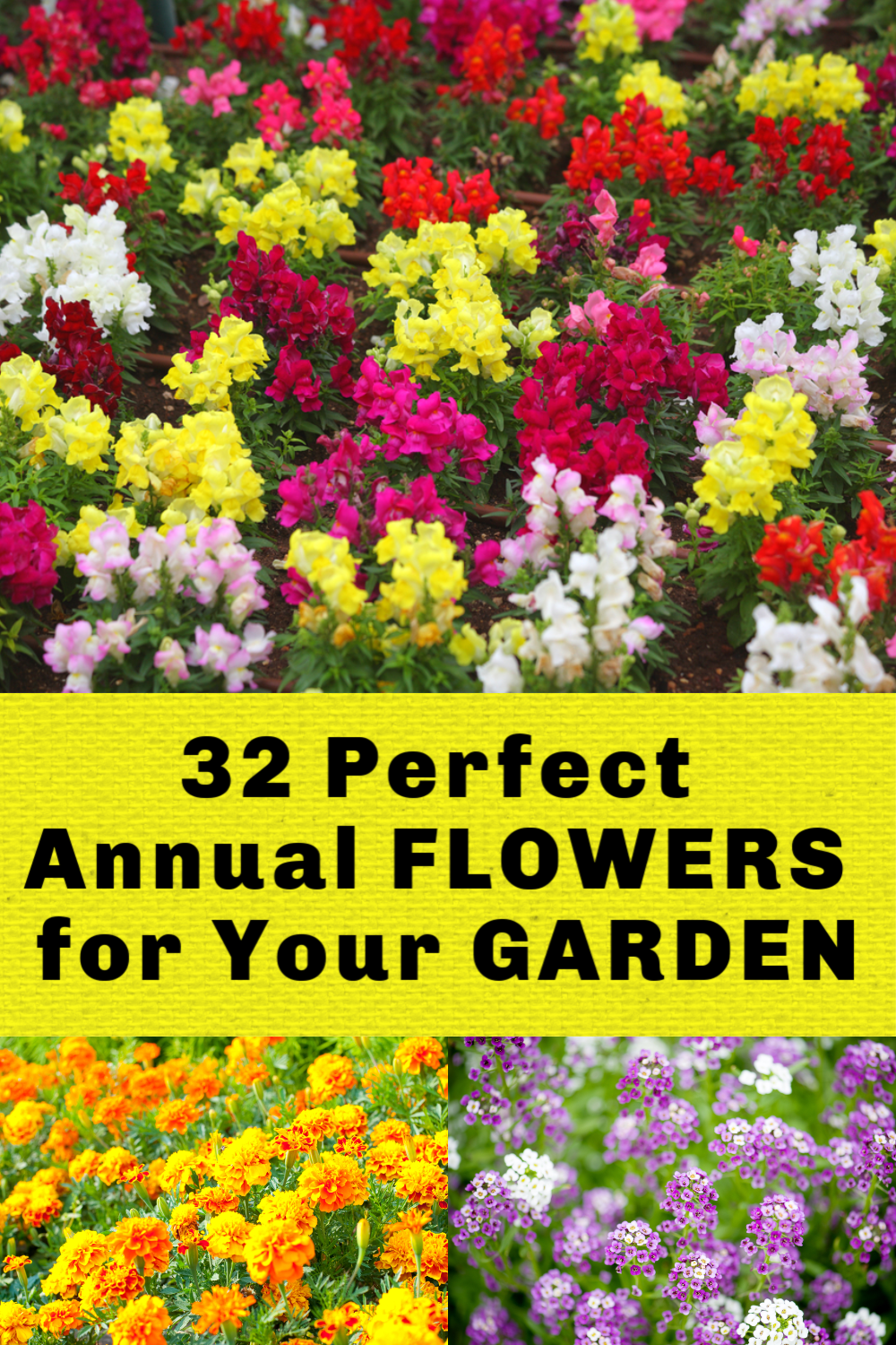 The Best Annual Flowers Annual Flowers Annual Flowers For Shade