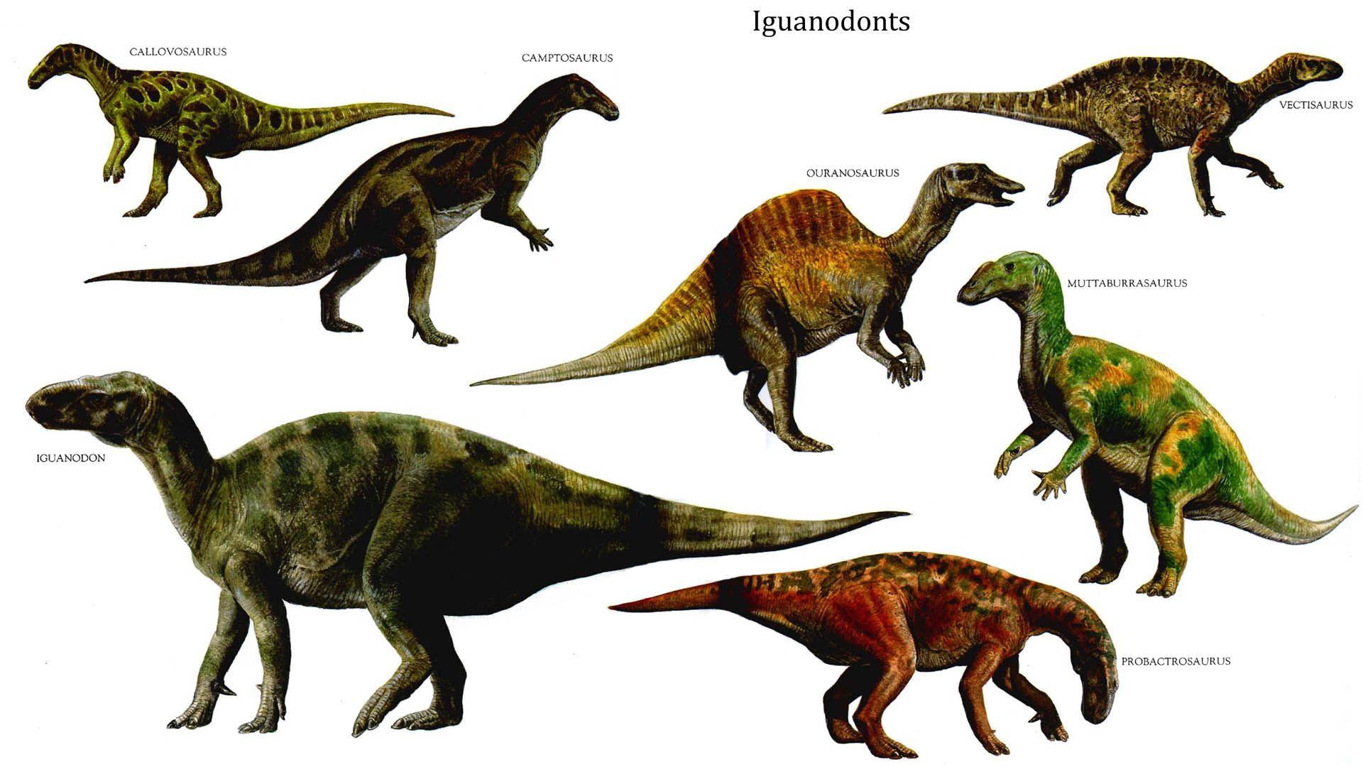 dinosaurs - Google Search | prehistoric animals | Pinterest ...