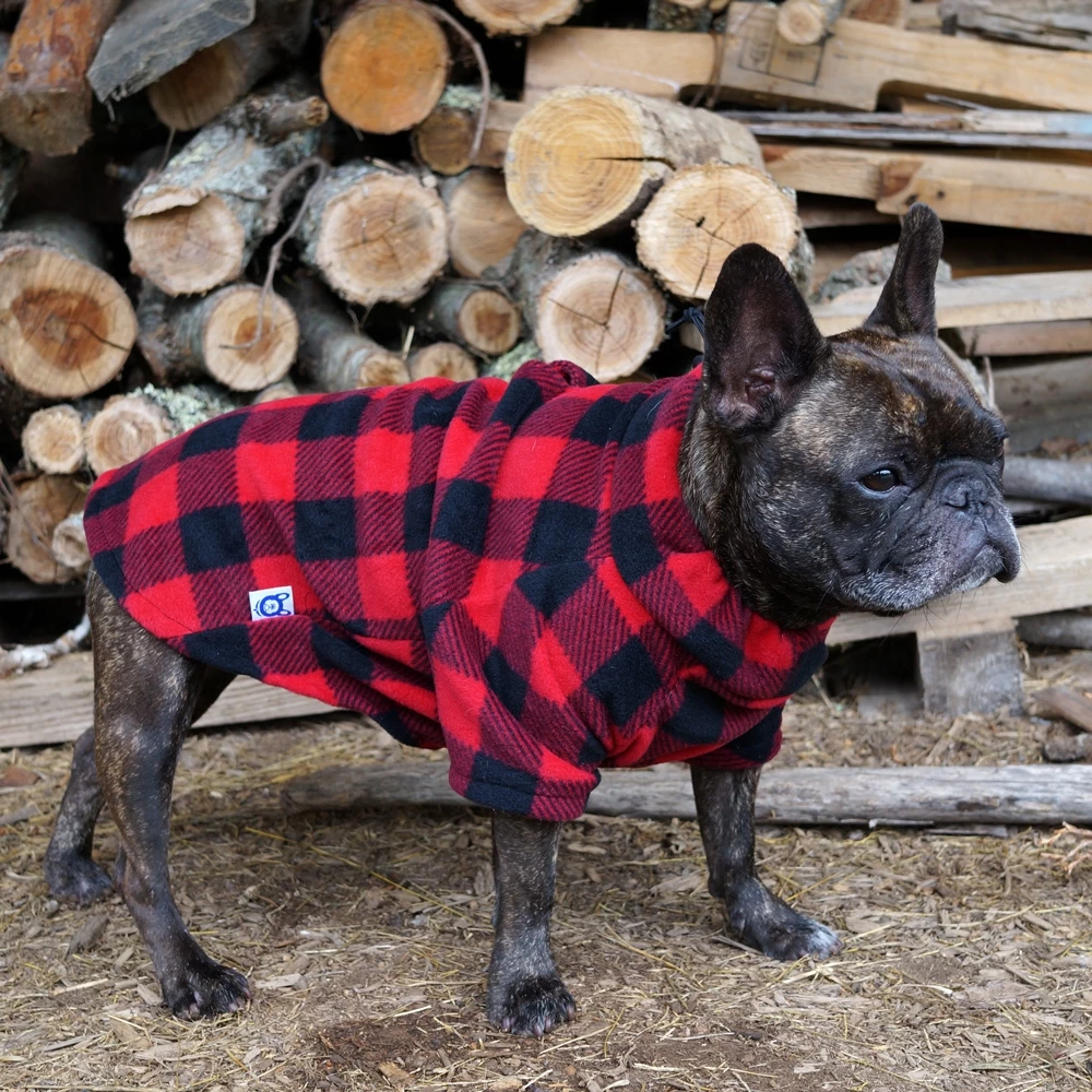 The Bullover French bulldog, Bulldog, Boston terrier