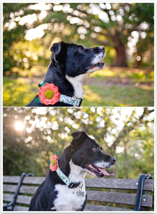 Maddie The Border Collie X By Dana Cubbage Photography Puppies