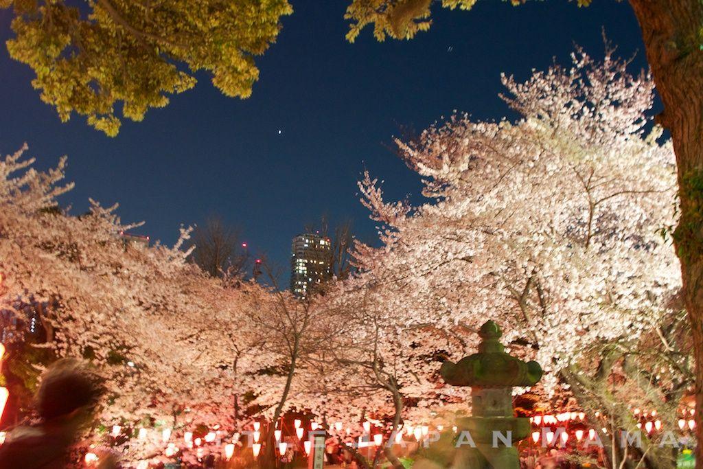 Yozakura Night Cherry Blossom Ueno Park Tokyo Japan By Www Littlejapanmama Com Ueno Park Japan Park Overall