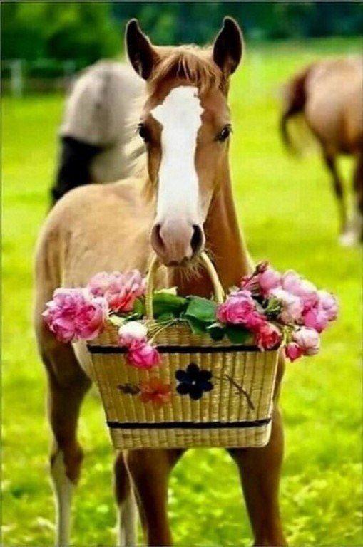 Картинки лошади поздравления с днем рождения