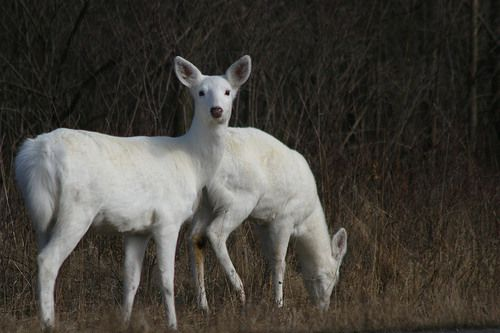 Seneca White Deer Inc. looks to build 'Welcome Center' at former depot
