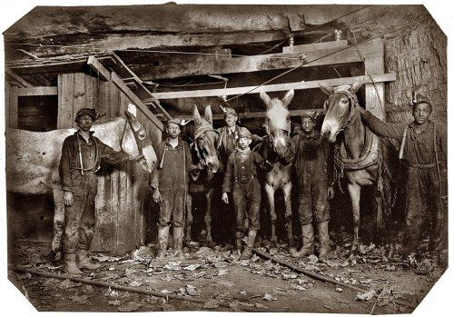| Mules stabled deep underground pulled carts loaded with coal, dug with ...