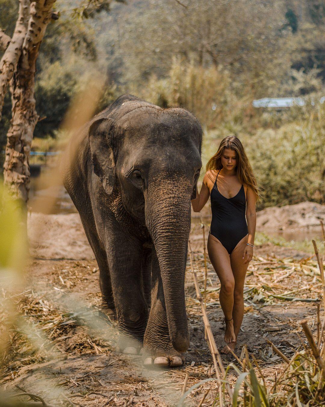 Chiang Mai Thailand Bettergetwanderlost Elephants