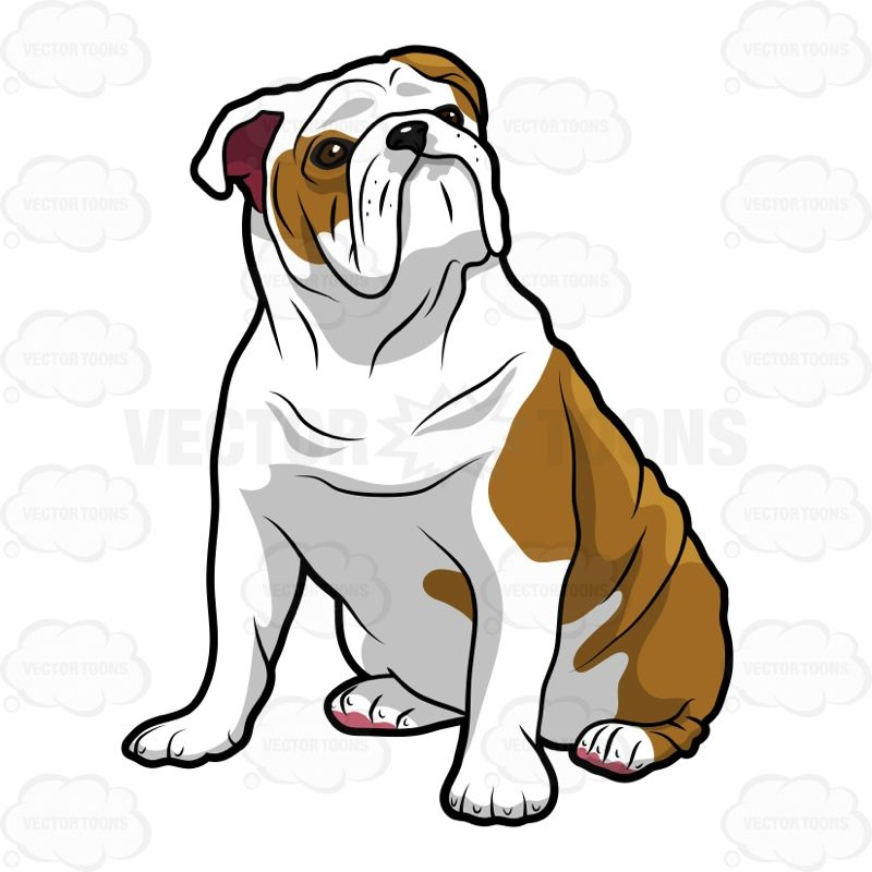 Bulldog sitting. English and looking left