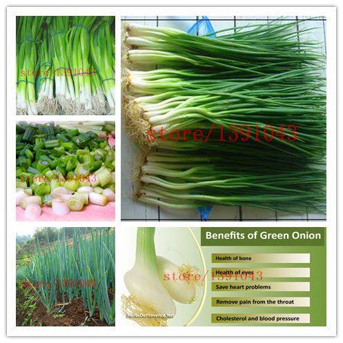 300 중국어 녹색 양파 씨앗 희귀 야채 씨앗 심기 요리 향신료