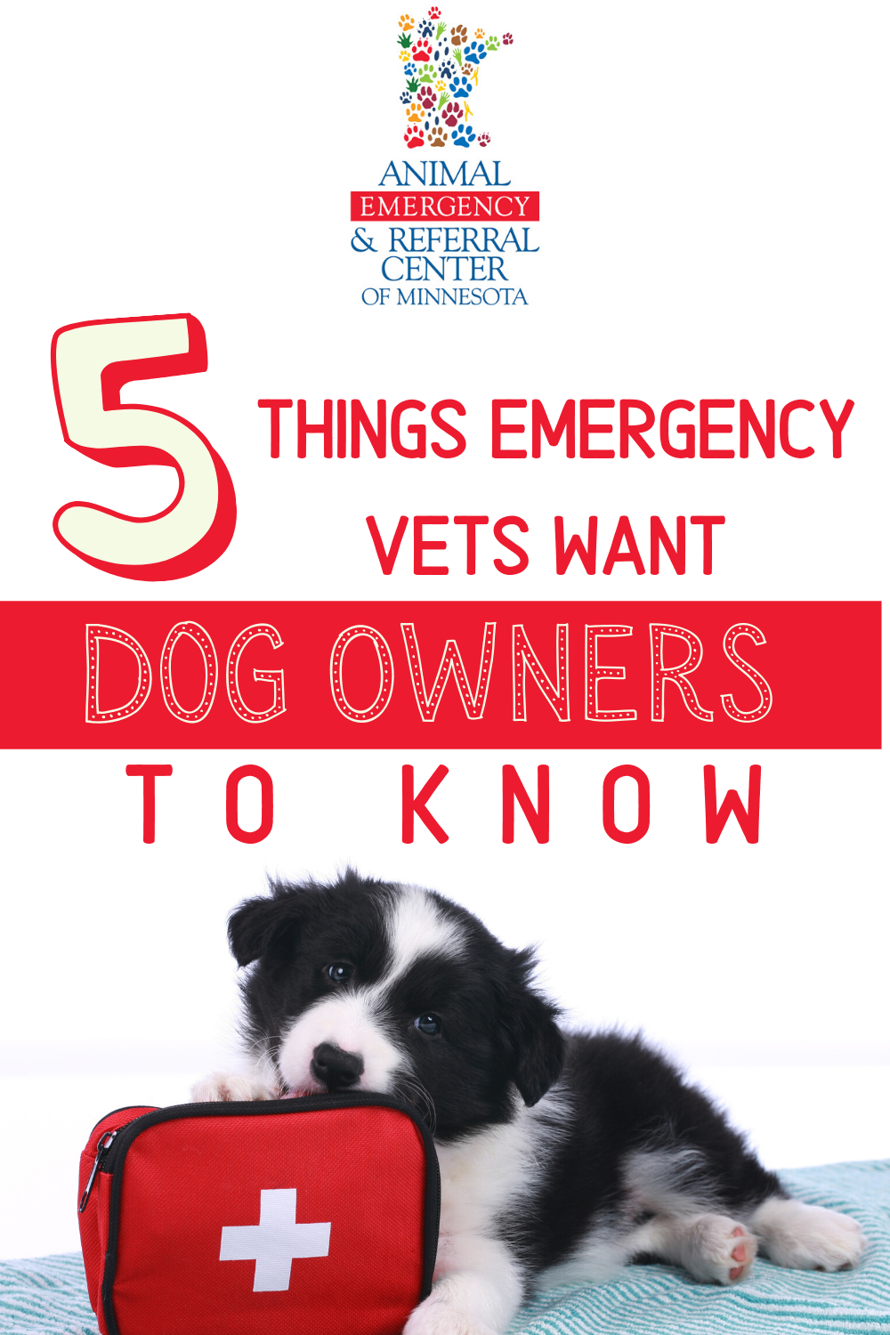 5 Things Emergency Vets Want Dog Owners to Know in 2020