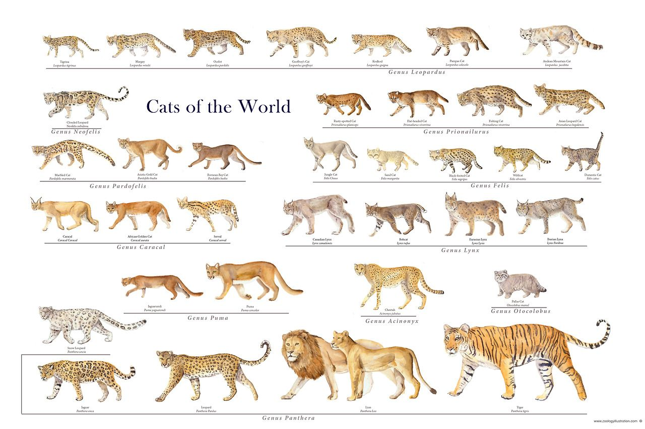 Cats Of The World Or Pet Wishlist Or Even Just A Hug Wild