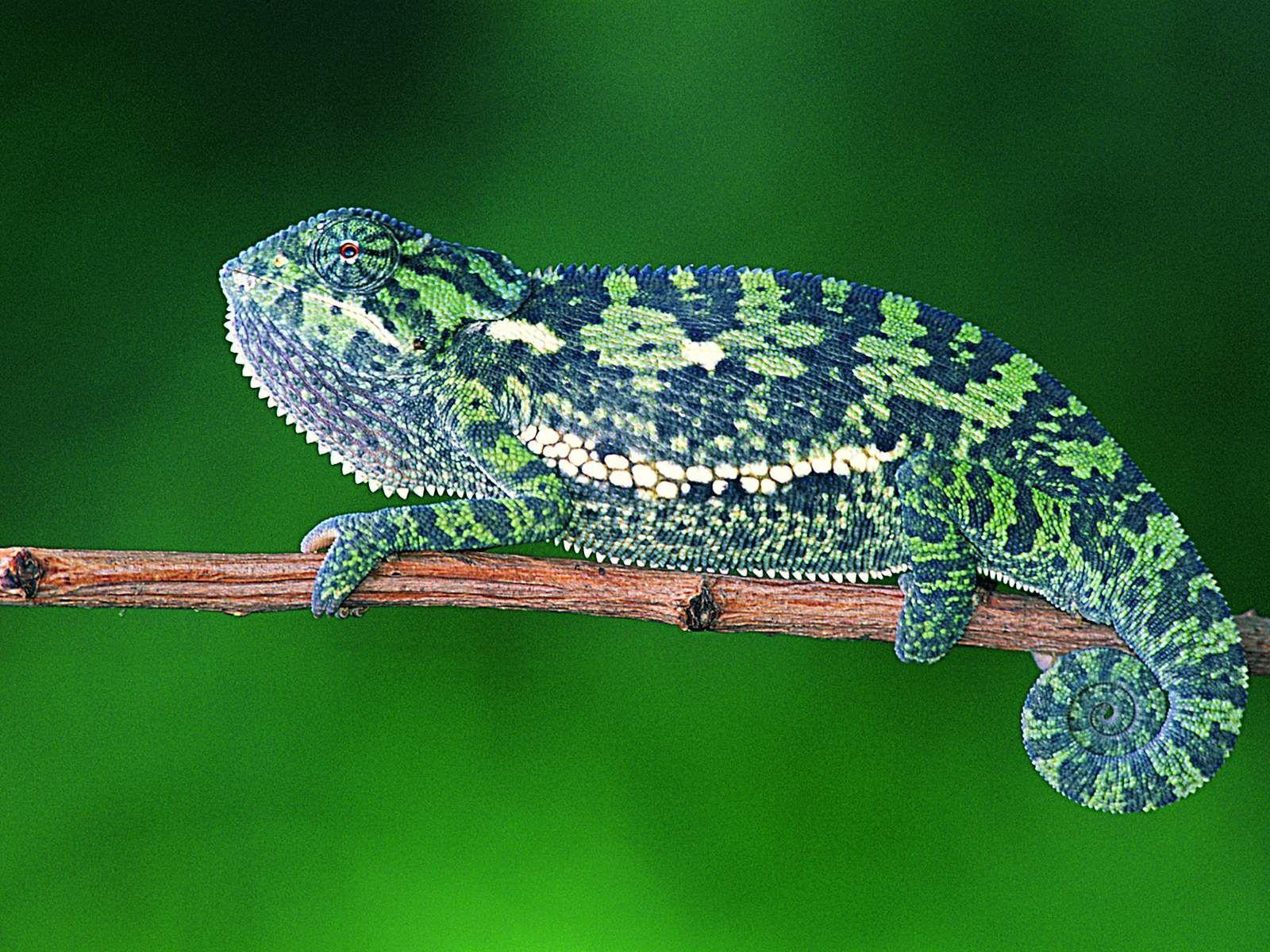 Lizards おしゃれまとめの人気アイデア Pinterest Miss Minoes