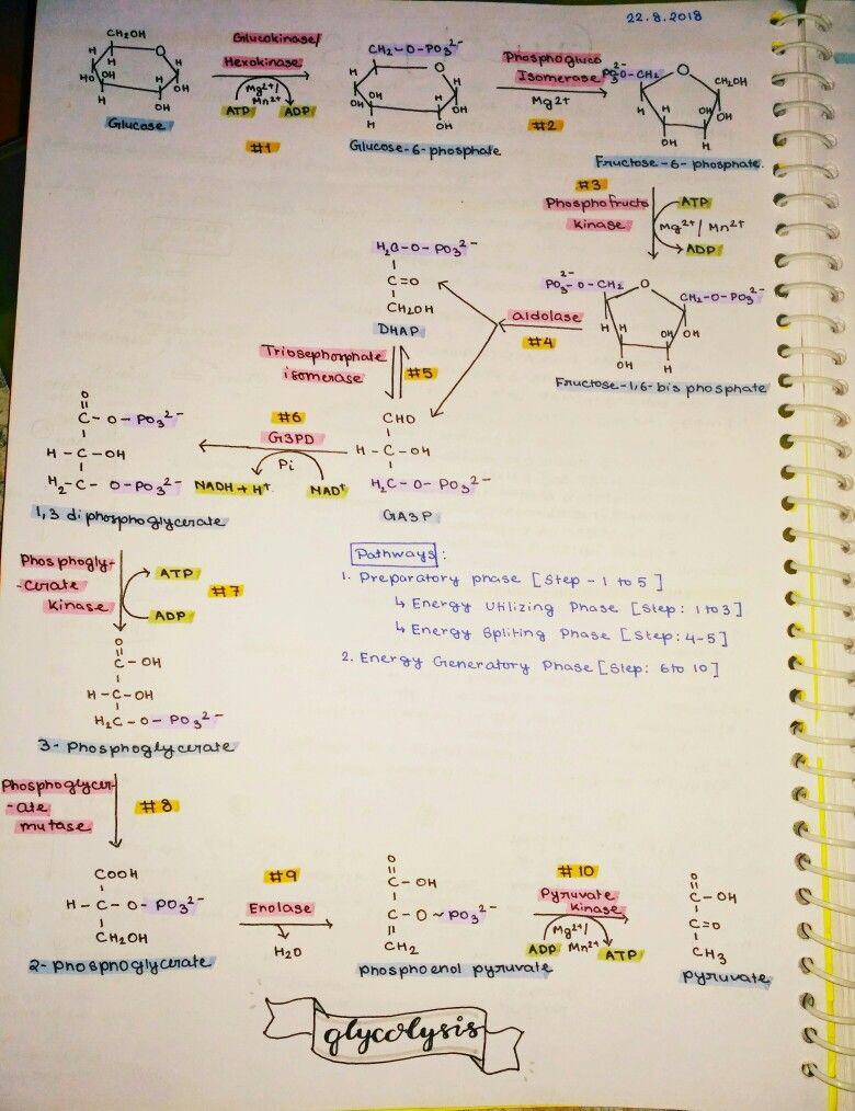 Step 2: Phosphoglucose Isomerase