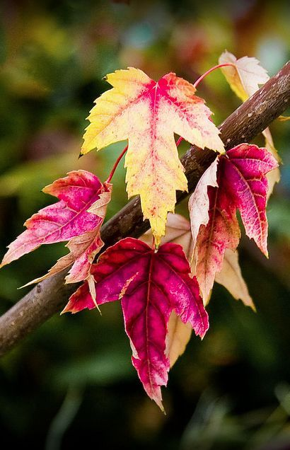 Nature's Paintbox #autumnleavesfalling