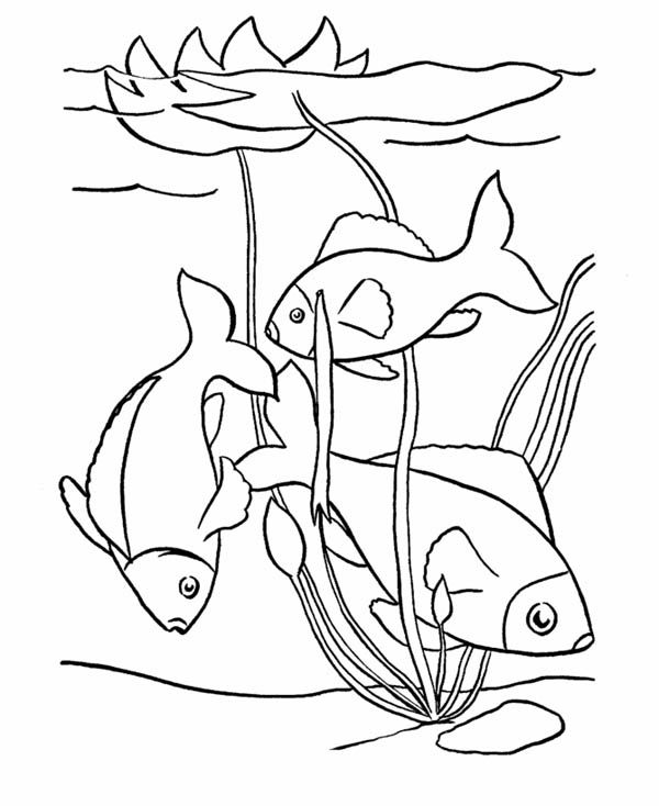 Fish Swim In The Pond Coloring Page Fish Swimming Coloring