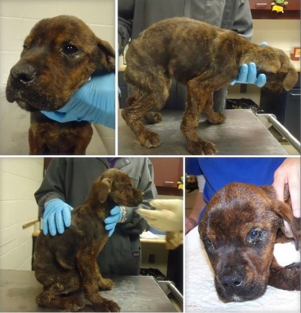 Fayetteville Nc This Little Puppy Has One Of The Saddest
