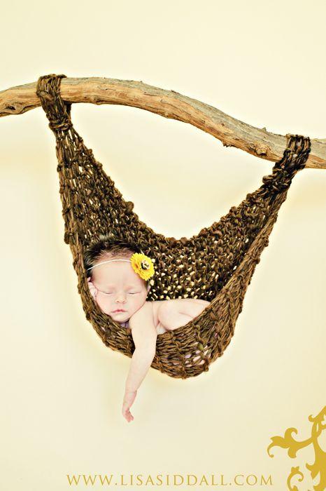newborn sunflower brown hammock