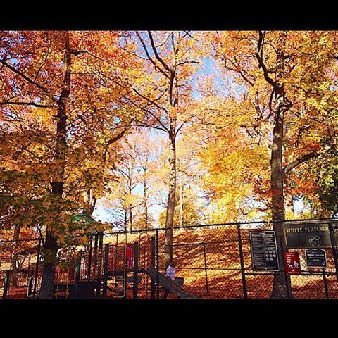 Autumn beauty...White Playground on Lyman Ave. in Fort Wadsworth. ☀️