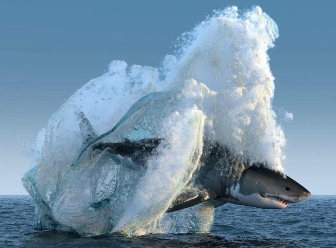 A Shark Got Frozen In An Iceberg Grande Tubarao Branco Animais
