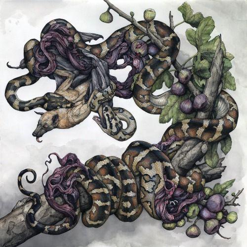 Insane Animal Illustrations by Lauren Marx