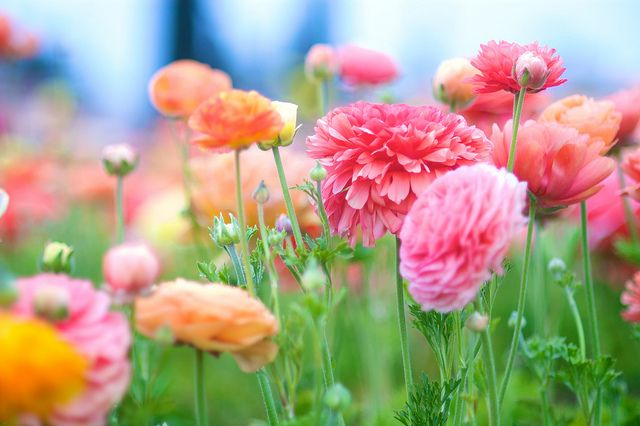 Life S Blows Cannot Break A Person Whose Spirit Is Warmed At The Fire Of Enthusiasm Norman Vincent Peale Flowers Pretty Flowers Beautiful Flowers
