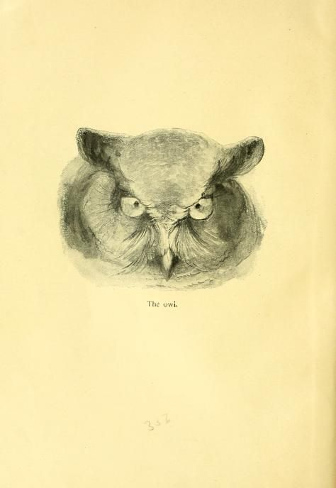 Wild animals I have known and 200 drawings / - Biodiversity Heritage Library