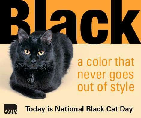 National Black Cat Day National Black Cat Day Black Cat Humor Black Cat Day