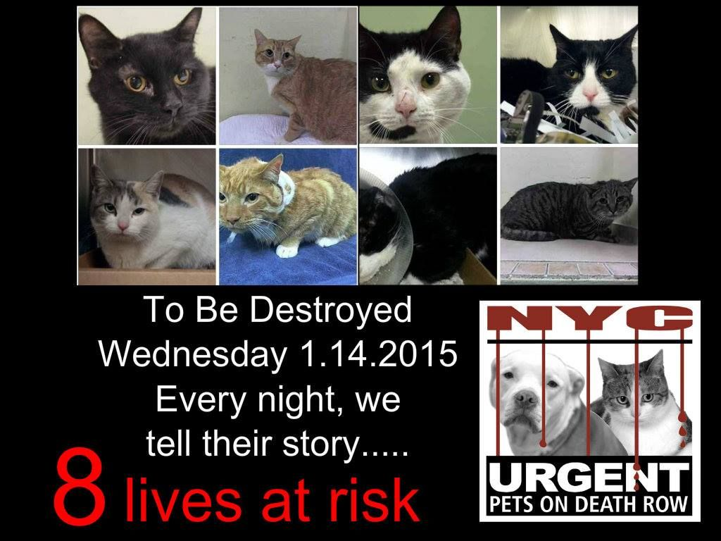 8 NYC cats WERE in danger. The shelter opens 8AM. Their
