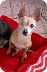 Mesa Az Chihuahua Mix Meet Snaggle A Dog For Adoption W Az