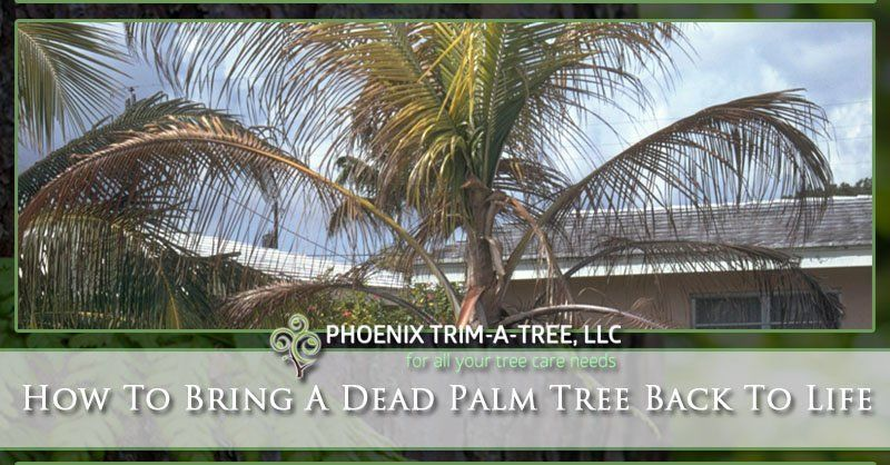 How To Bring A Dead Palm Tree Back To Life (With images