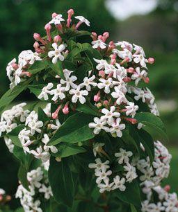 Fragrant Plants For Pathways Grow Plants Fine Gardening Sun Plants