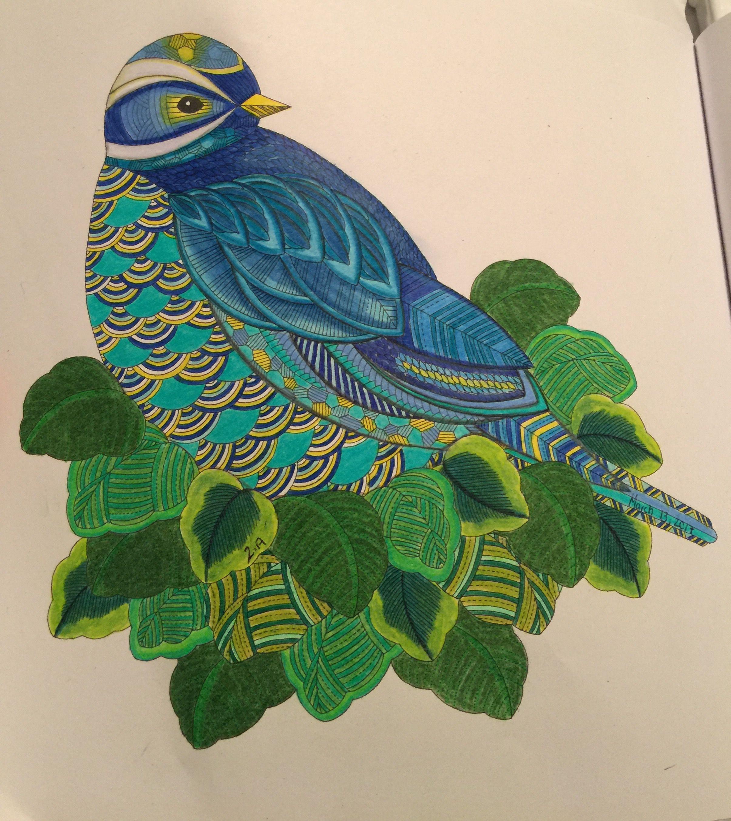 Color me draw me animal kingdom book - Animal Kingdom Millie Marotta Birds Color Me Draw Bird Coloring Book