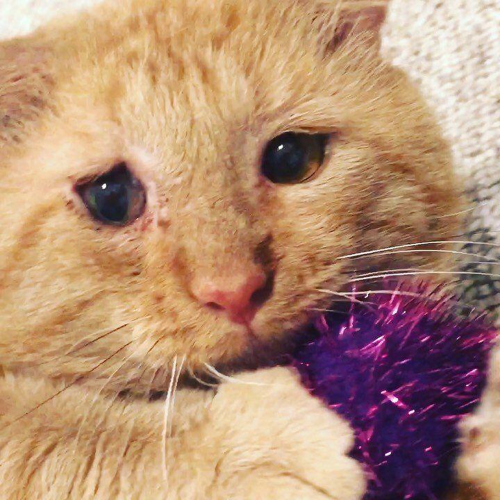 Felv Adoption Program Profile Series Carver Scott Humane Society Humane Society Cat Problems Cat Adoption