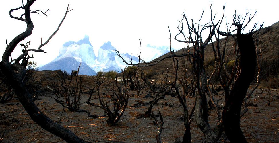 árboles #nativos #quemados nos muestran su cara #torresdelpaine #Patagonia  | Bosque, Naturaleza, Patagonia