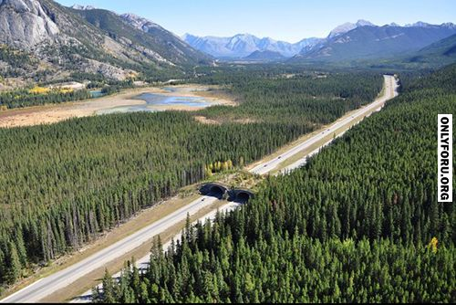 A wildlife overpass on the trans-canada highway - #funny, #lol, #fun, #humor…