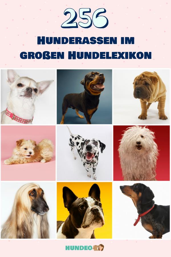 265 Hunderassen Von A Z Im Grossen Hundelexikon In 2020 Hunde
