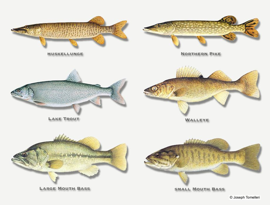 Alexander 39 s on rowan lake fish species found in rowan for Types of fish