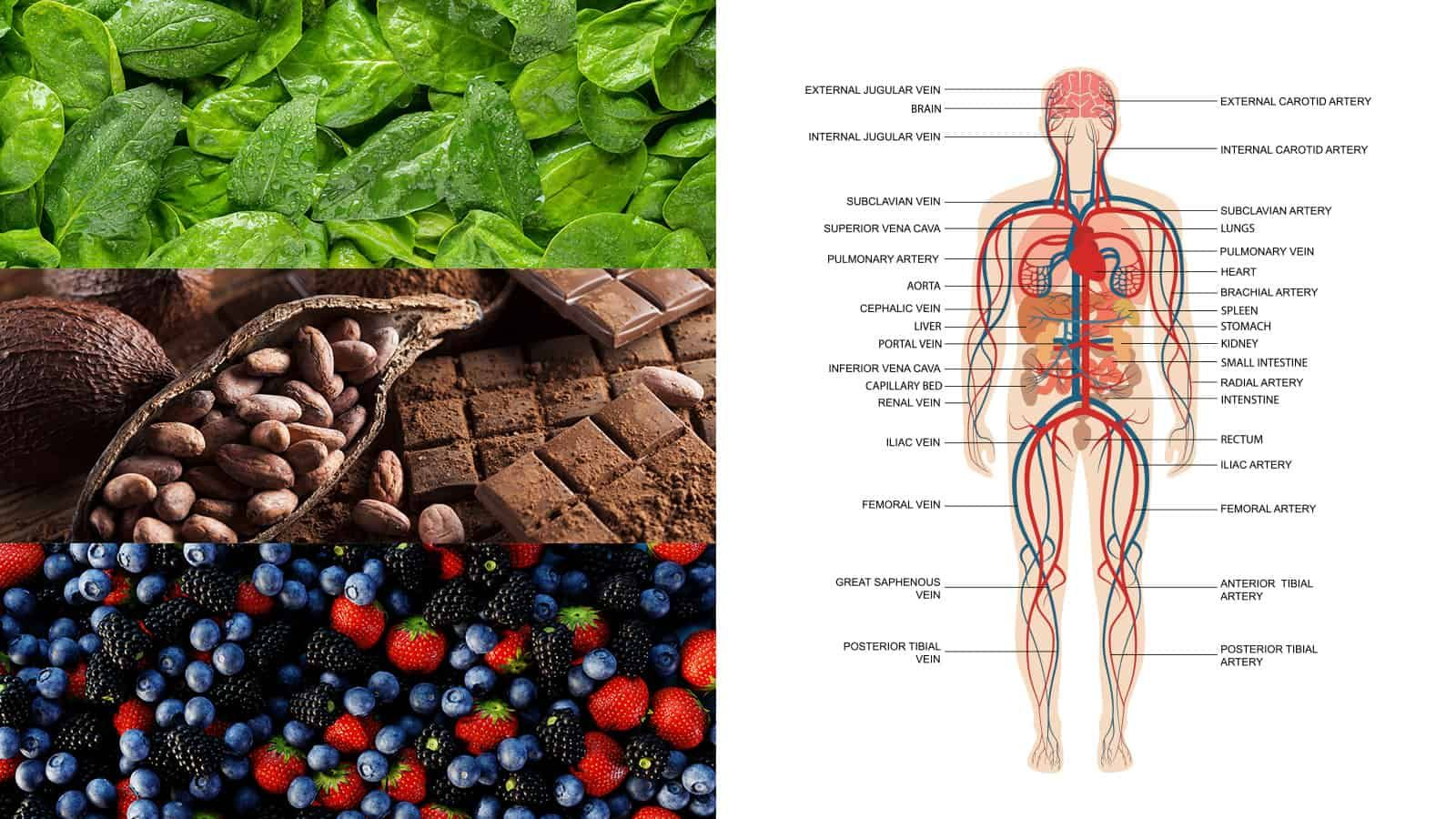 Dietitian Reveals The 15 Best Foods To Support Your Circulatory