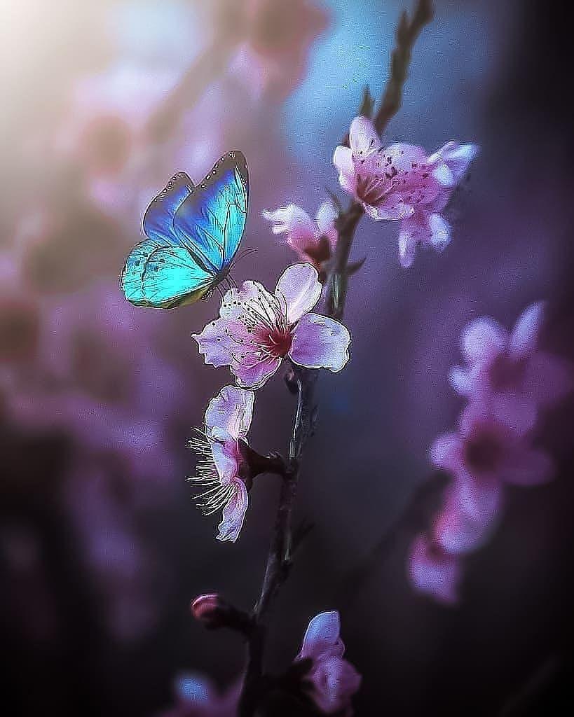 2 485 Begenme 24 Yorum Instagram Da Travel Beautifulplaces Inthe World Butterfly Wallpaper Backgrounds Butterfly Pictures Beautiful Flowers Wallpapers