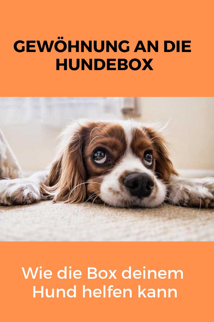 Die Hundebox Kann Deinen Hund In Verschiedenen Situationen Helfen Auch Beim Alleinebleiben Lese Hier Warum Das So Ist Und W Hunde Hundebox Und Hunde Futter