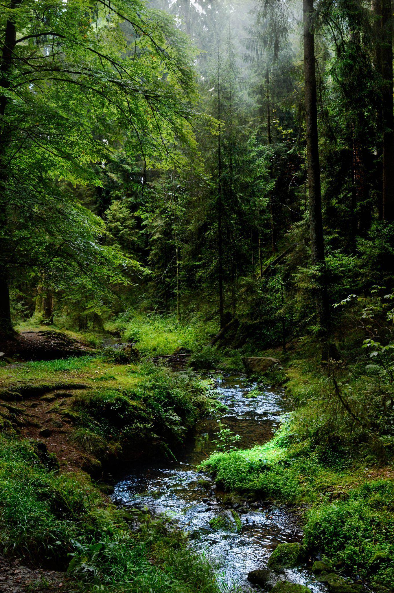 Den Teutoburger Wald entdecken - 3 besondere Ausflugsziele - Sophias Welt