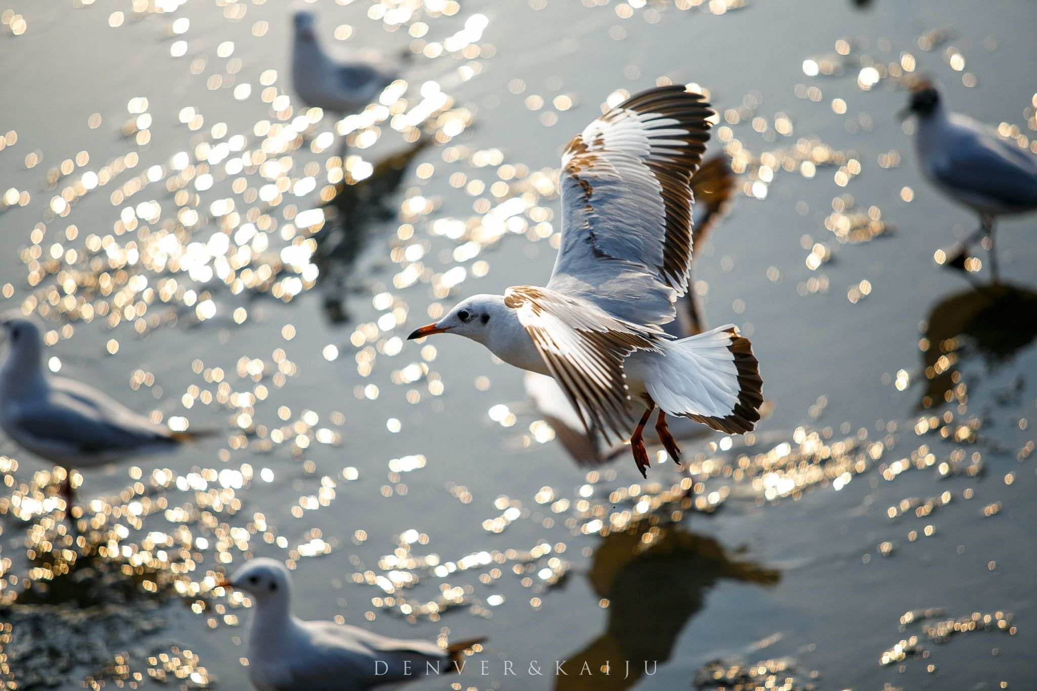 Bangpu seagull by Denver Kaiju on 500px