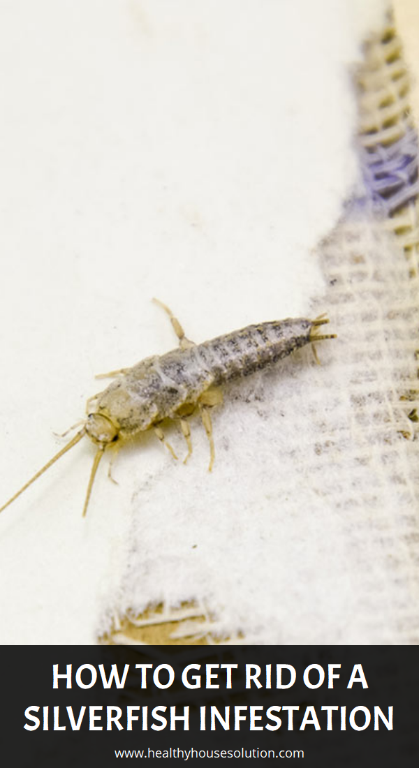How To Get Rid Of A Silverfish Infestation Silverfish Feel Good Food Infestations